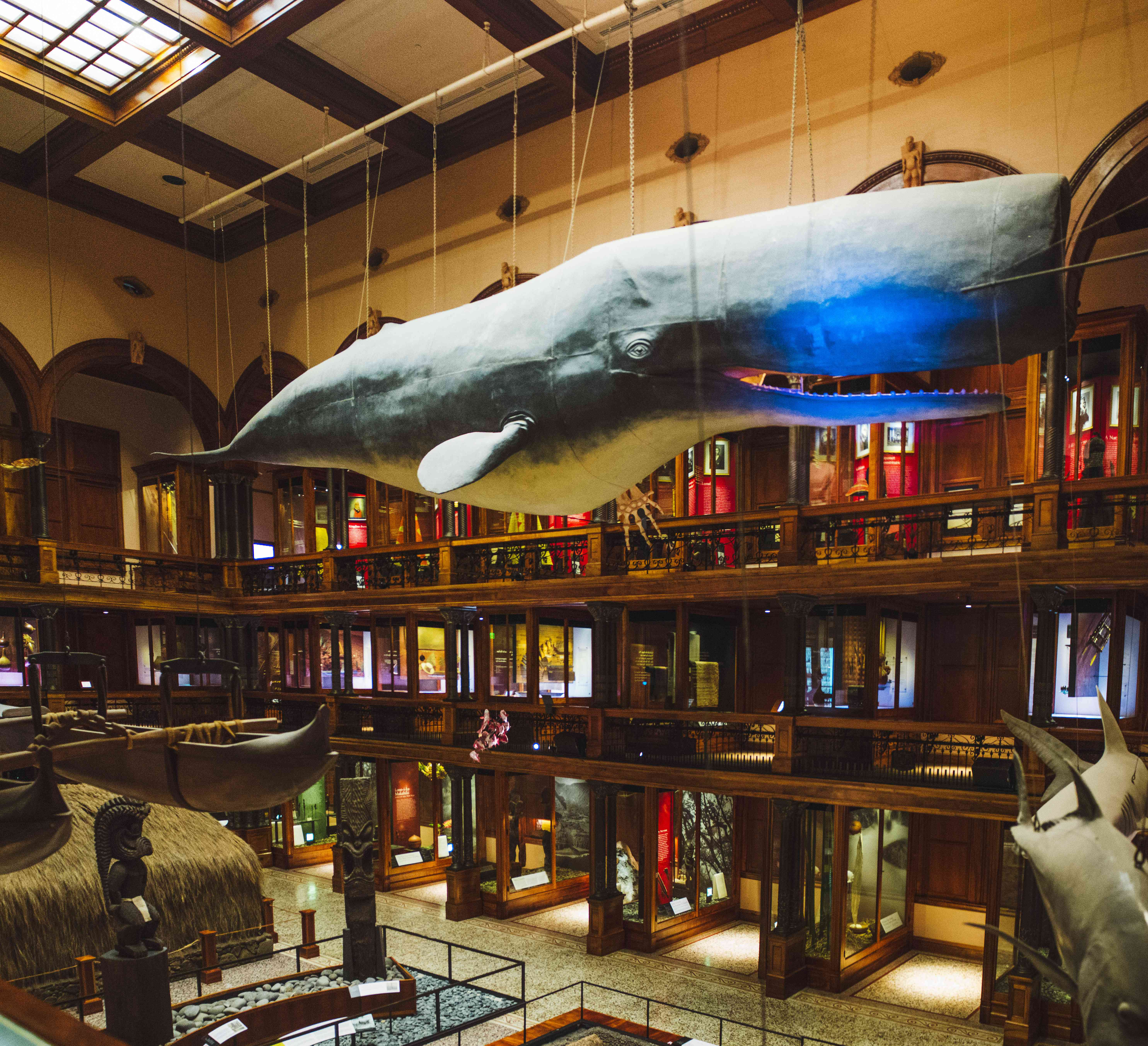 Large Whale in main hall of Bishop Museum