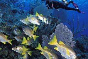 Vertical Reef Diving Scene