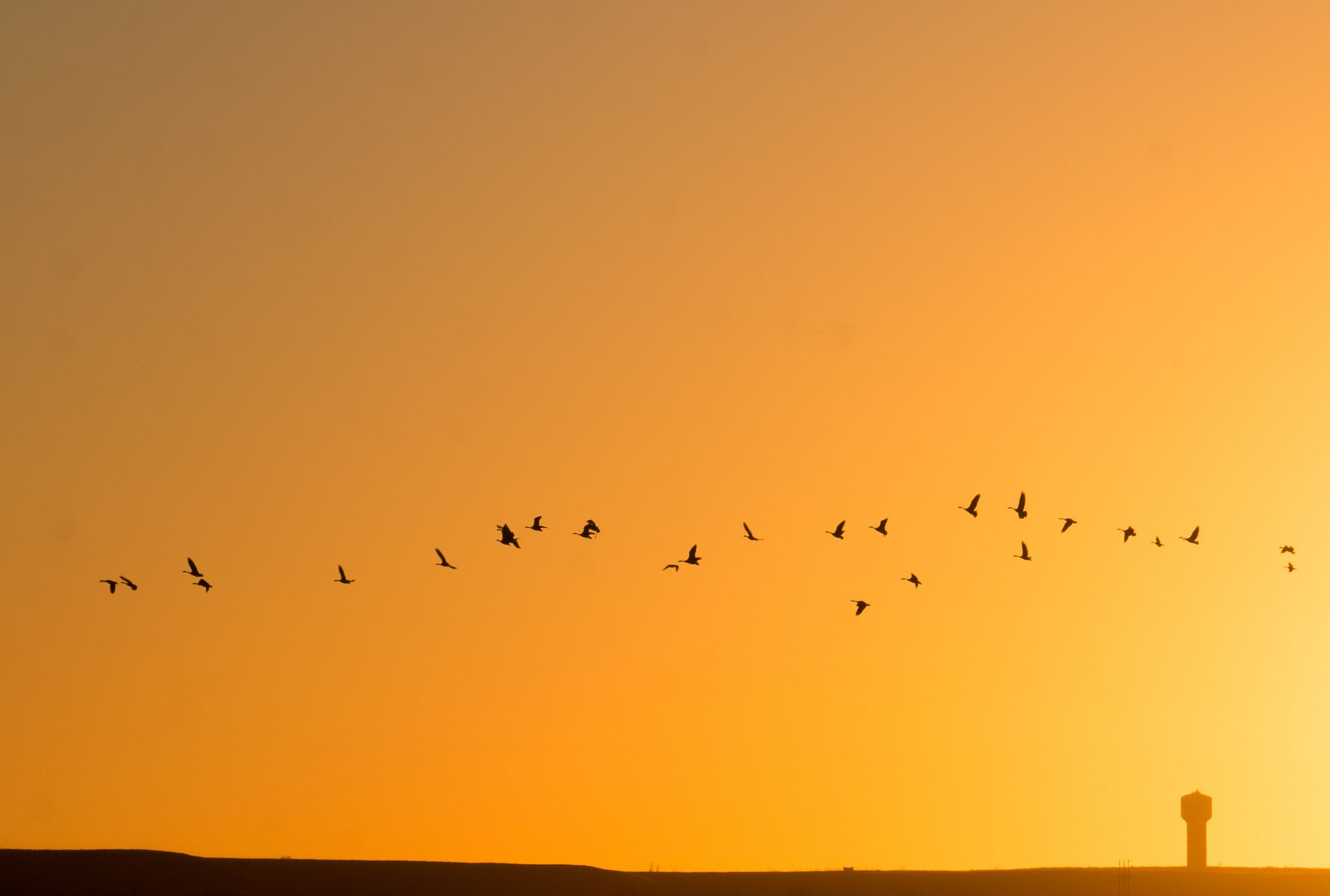 Birds over Tuttle Creek Lake