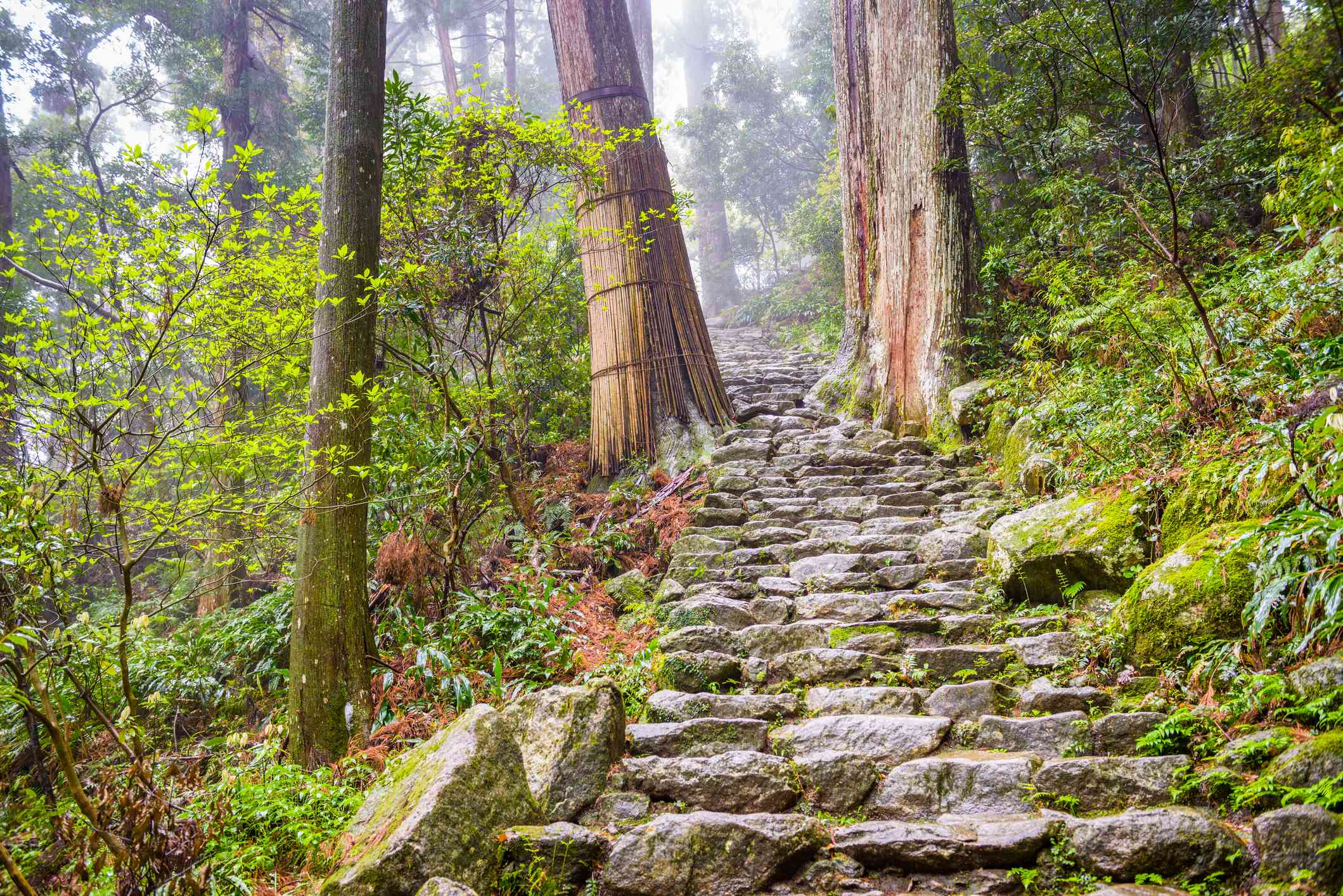 stone staircase going through a misty forest on the Kumano Kodo trail