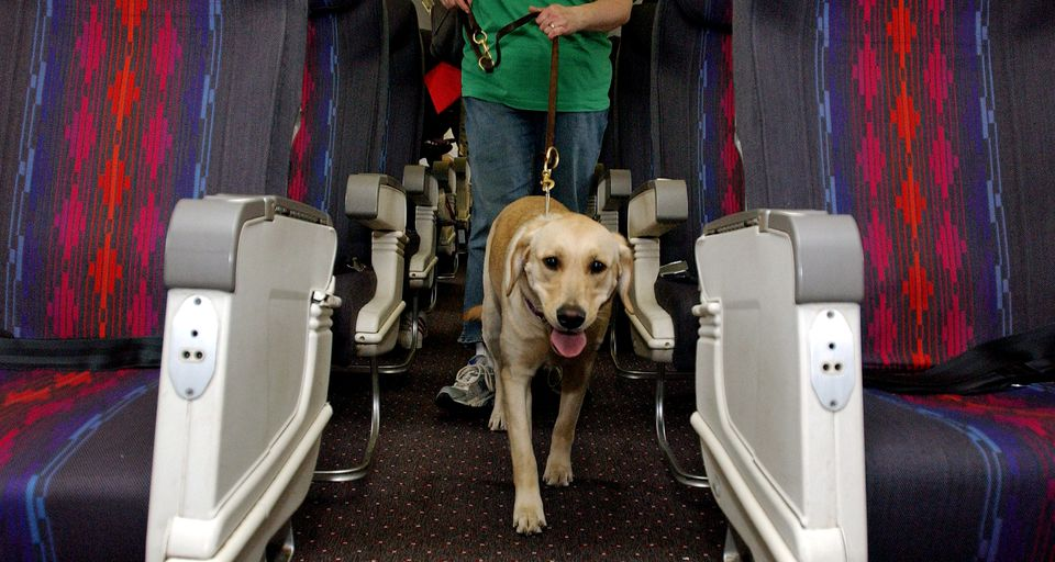 service dog on airplane