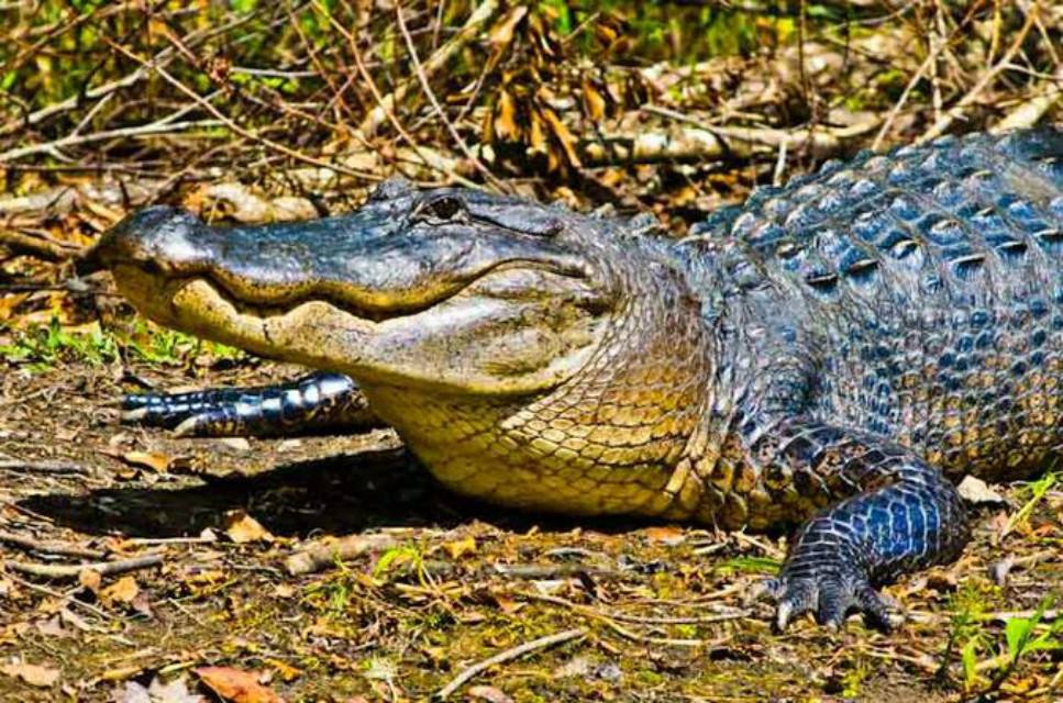 Small Group Swamp Tour by Airboat With Downtown New Orleans Pickup
