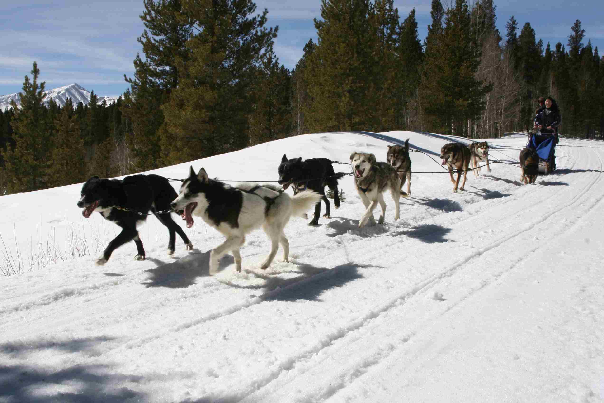 Dog sled tour organized by Park Hyatt Beaver Creek