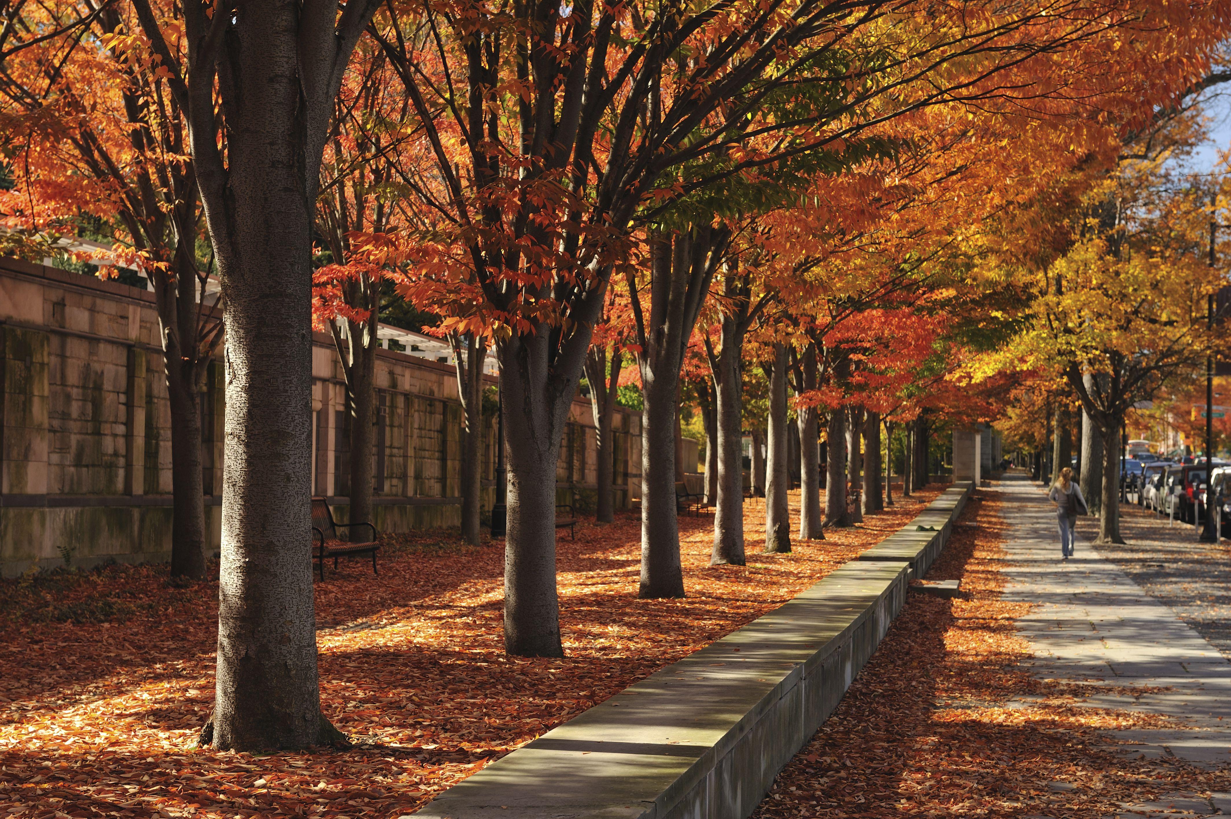 Tree-lined sidewalk Princeton, NJ