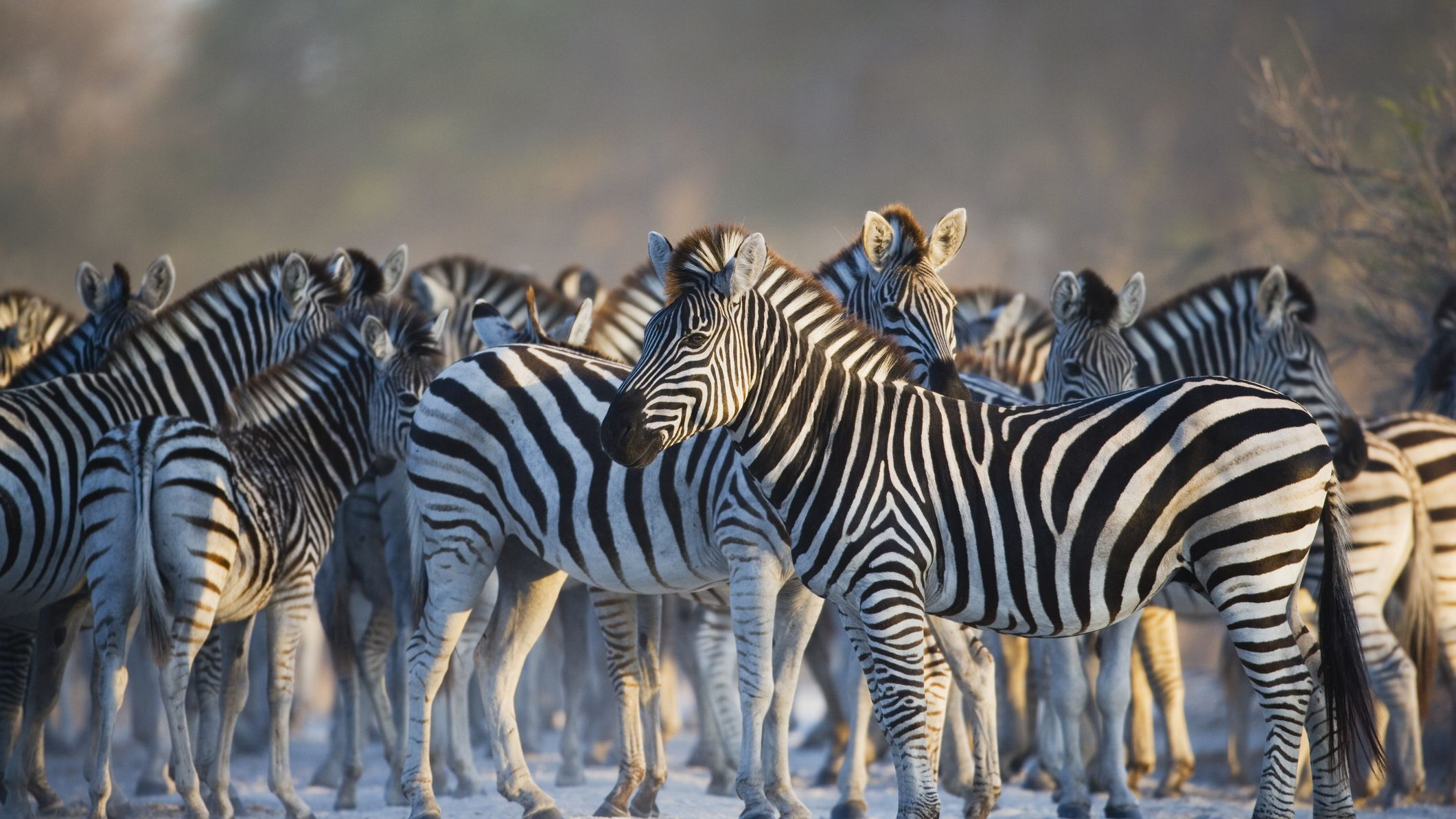 Africa's Top 12 Safari Animals and Where to Find Them