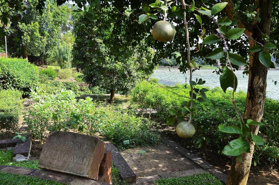 Ekamravan Medicinal Plant Garden