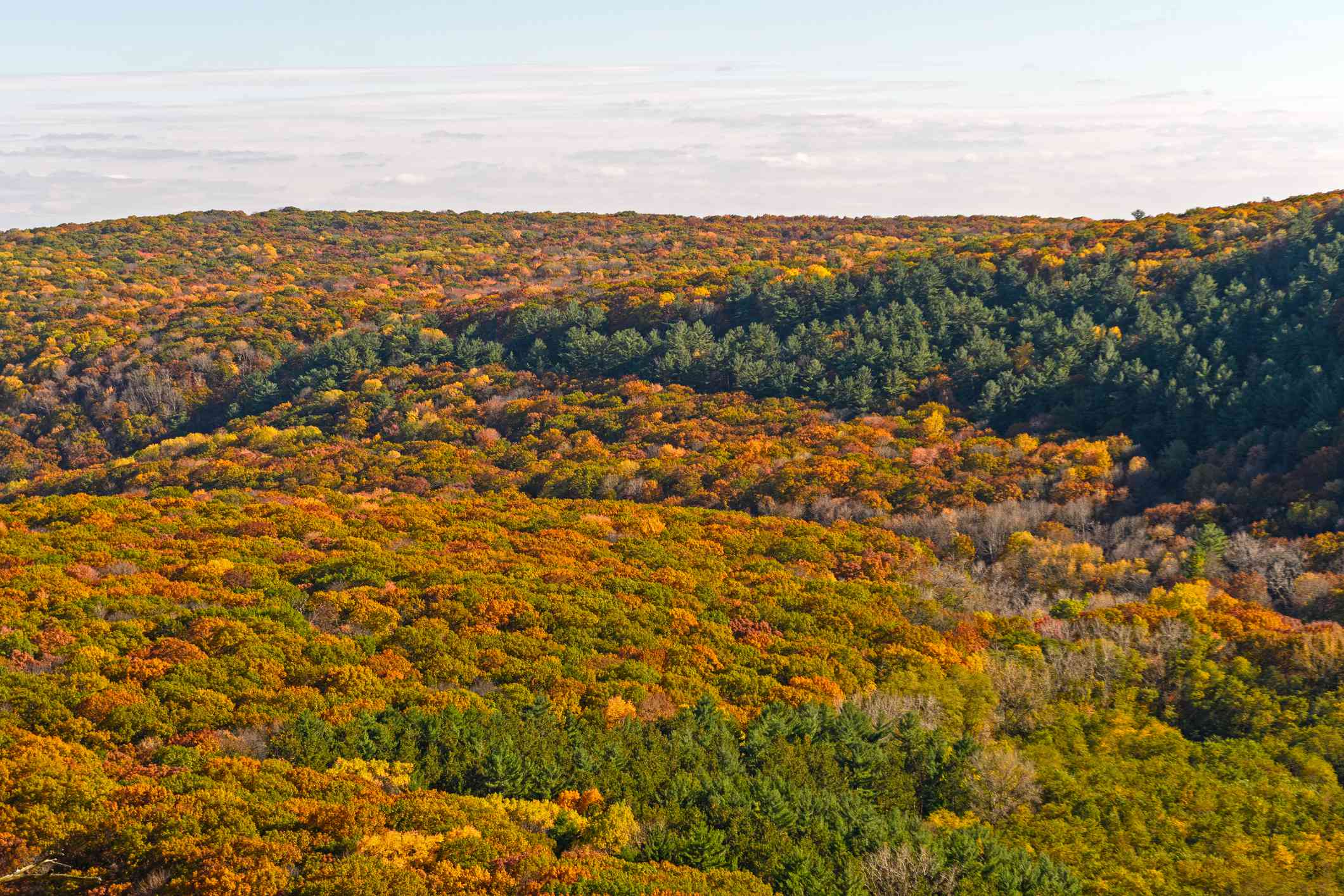 Scenic View Of Trees Against Sky During Autumn
