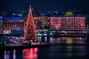 Very tall Christmas tree in Skeppsbron in Stockholms old town