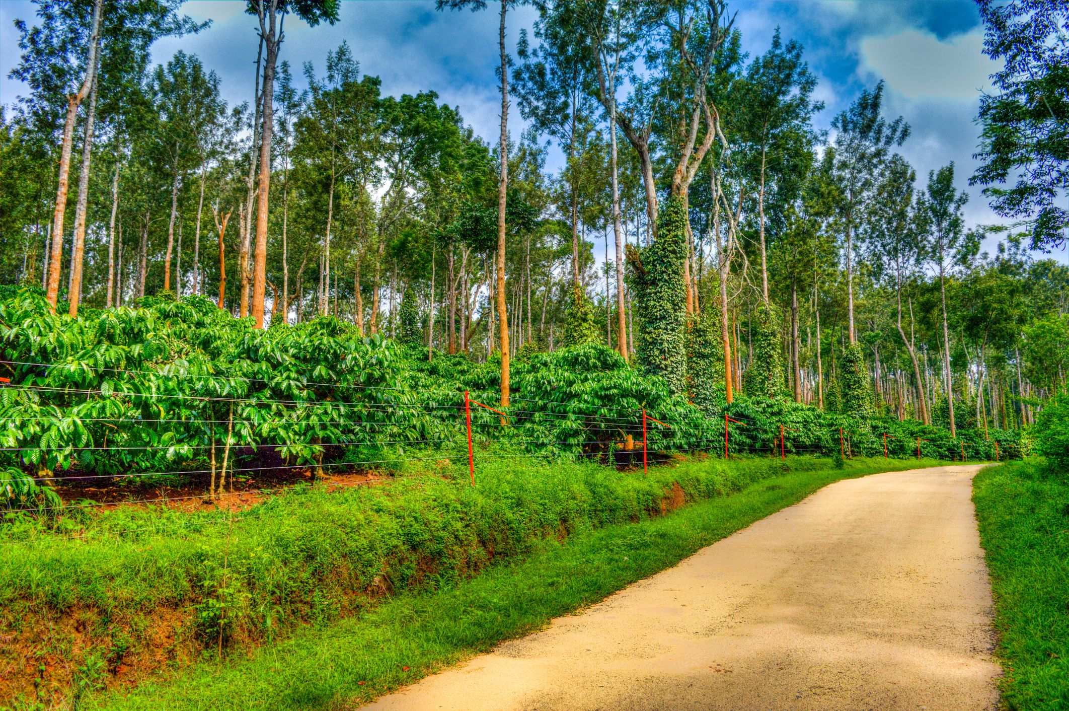 The 9 Best Coorg Resorts of 2019