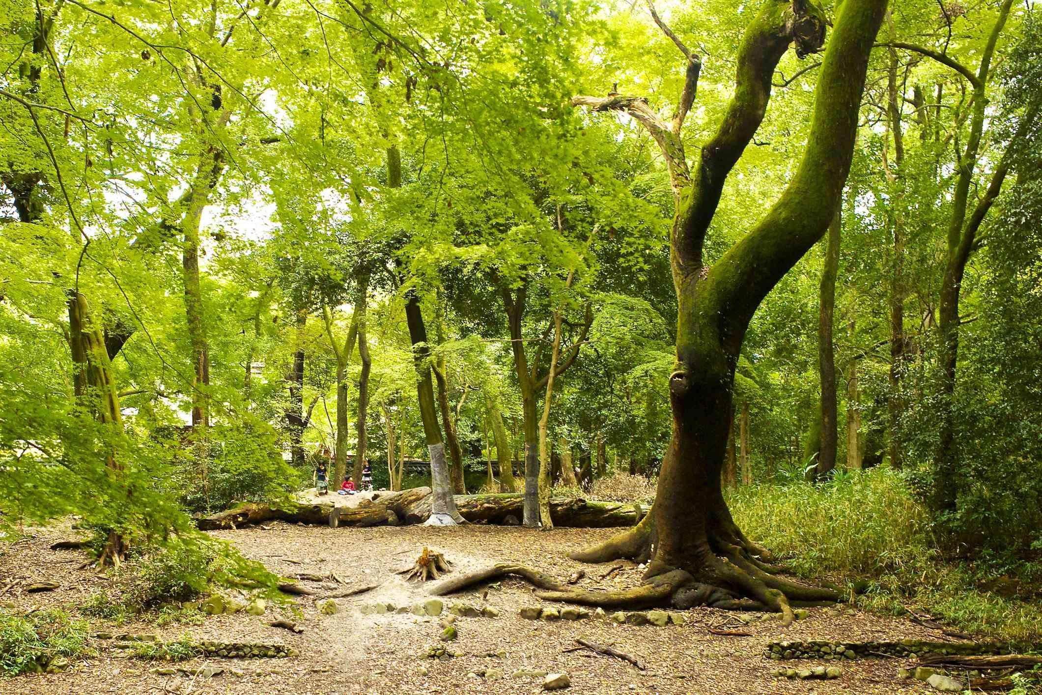Tadasu-no-Mori forest
