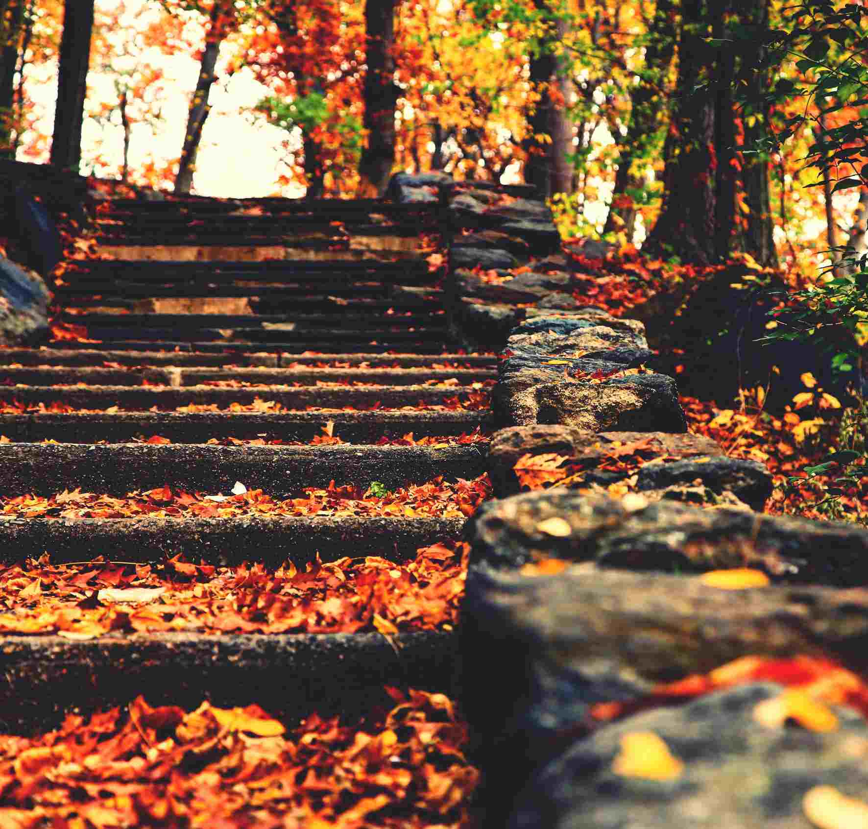 Autumn Leaves On Stone Steps At Inwood Hill Park
