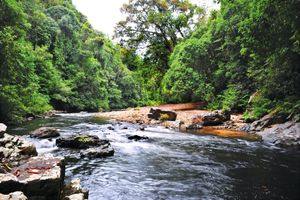 Kelah Sanctuary is located in Lubuk Tenor, Sungai Tahan, Taman Negara