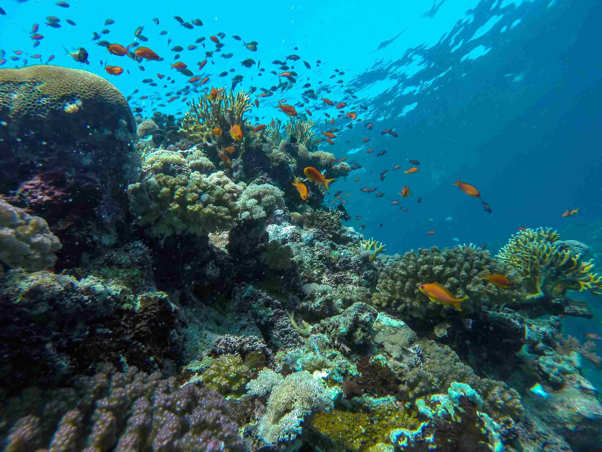 Saudi Red Sea Scuba Diving