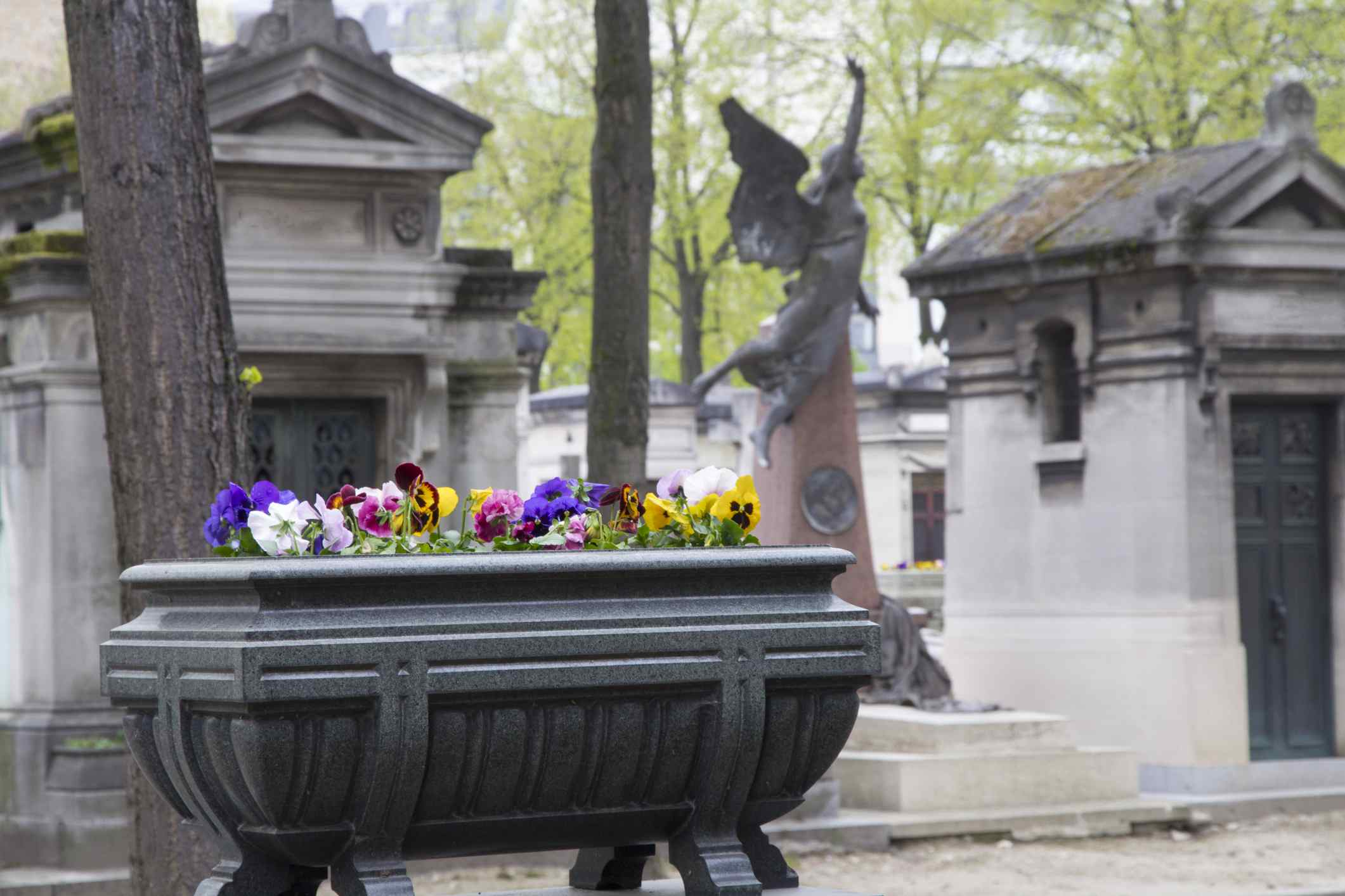 Pansies and violets in the Montparnasse Cemetery, Paris