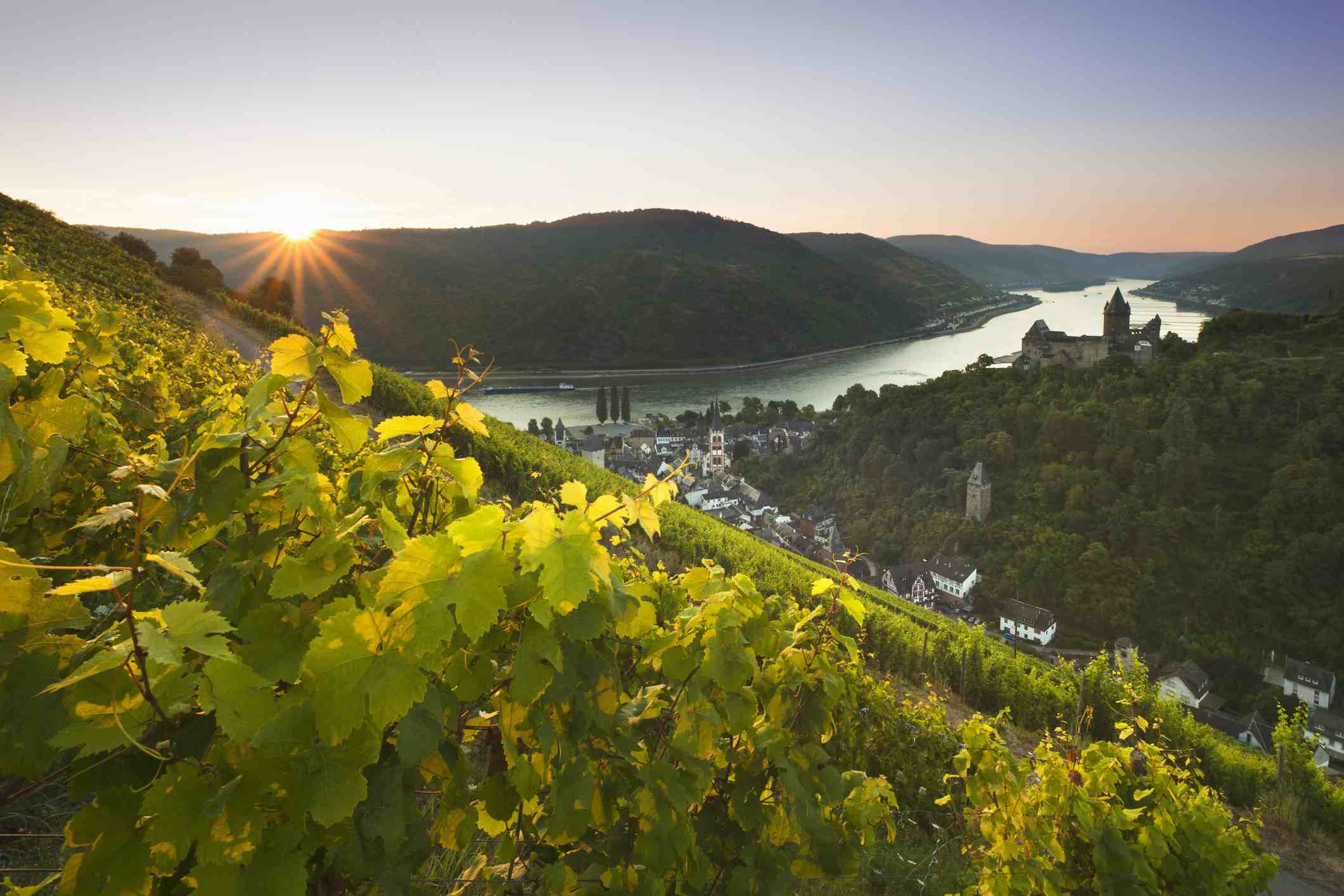 Bacharach vineyard