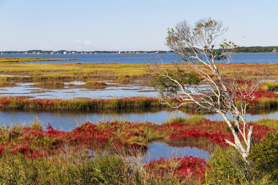 Assateague Island Autumn Landscape