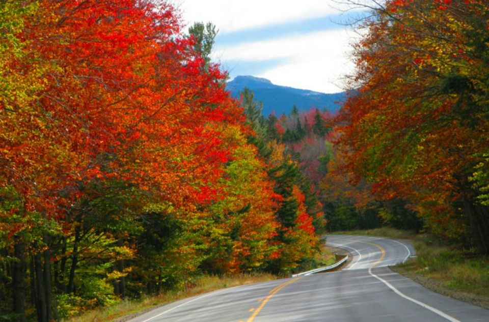 A highway winds through a forest full of red trees
