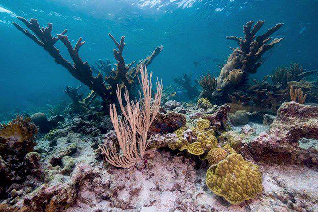 Buck Island coral, St. Croix