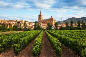 Vineyard leading up to a village in La Rioja, Spain