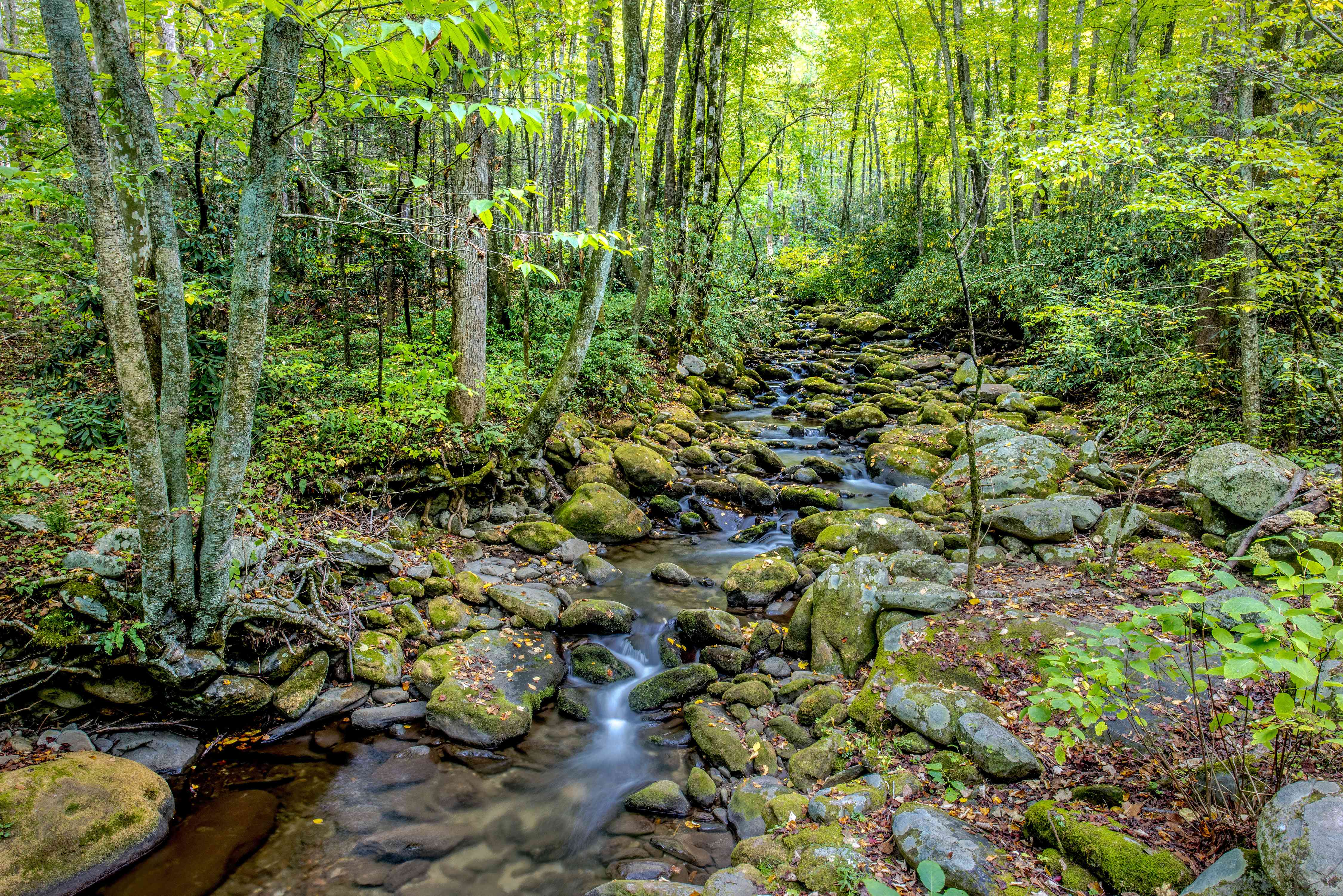 Hiking a creek in the Great Smoky Mountains National Park