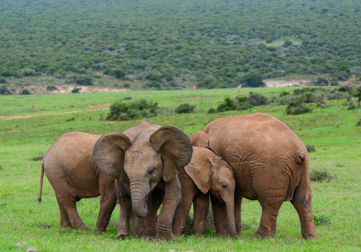 Addo Elephant National Park, South Africa: The Complete Guide