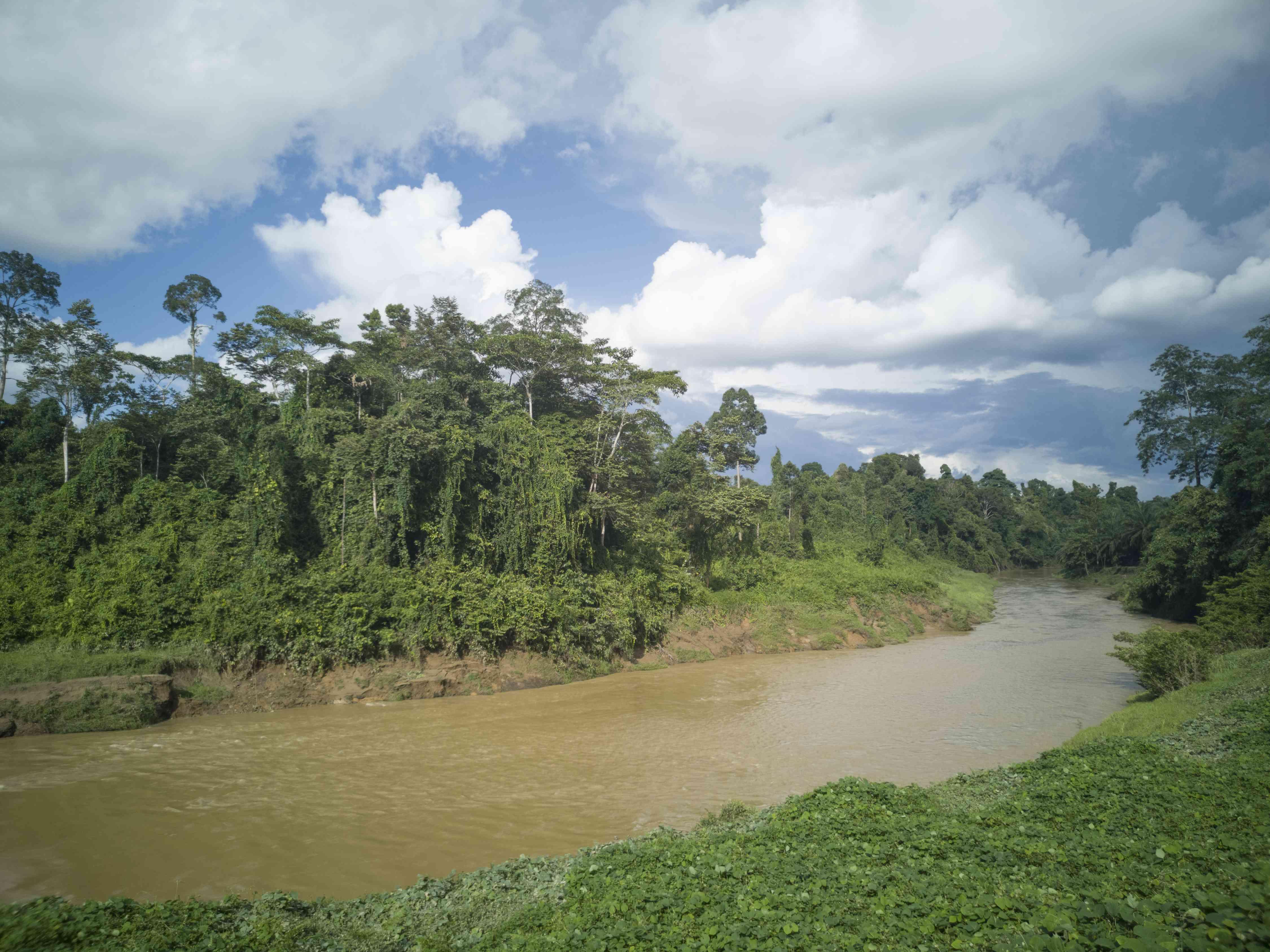 Muddy river at Tawau Hills National Park in Sabah, Borneo