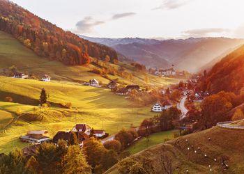 Black Forest