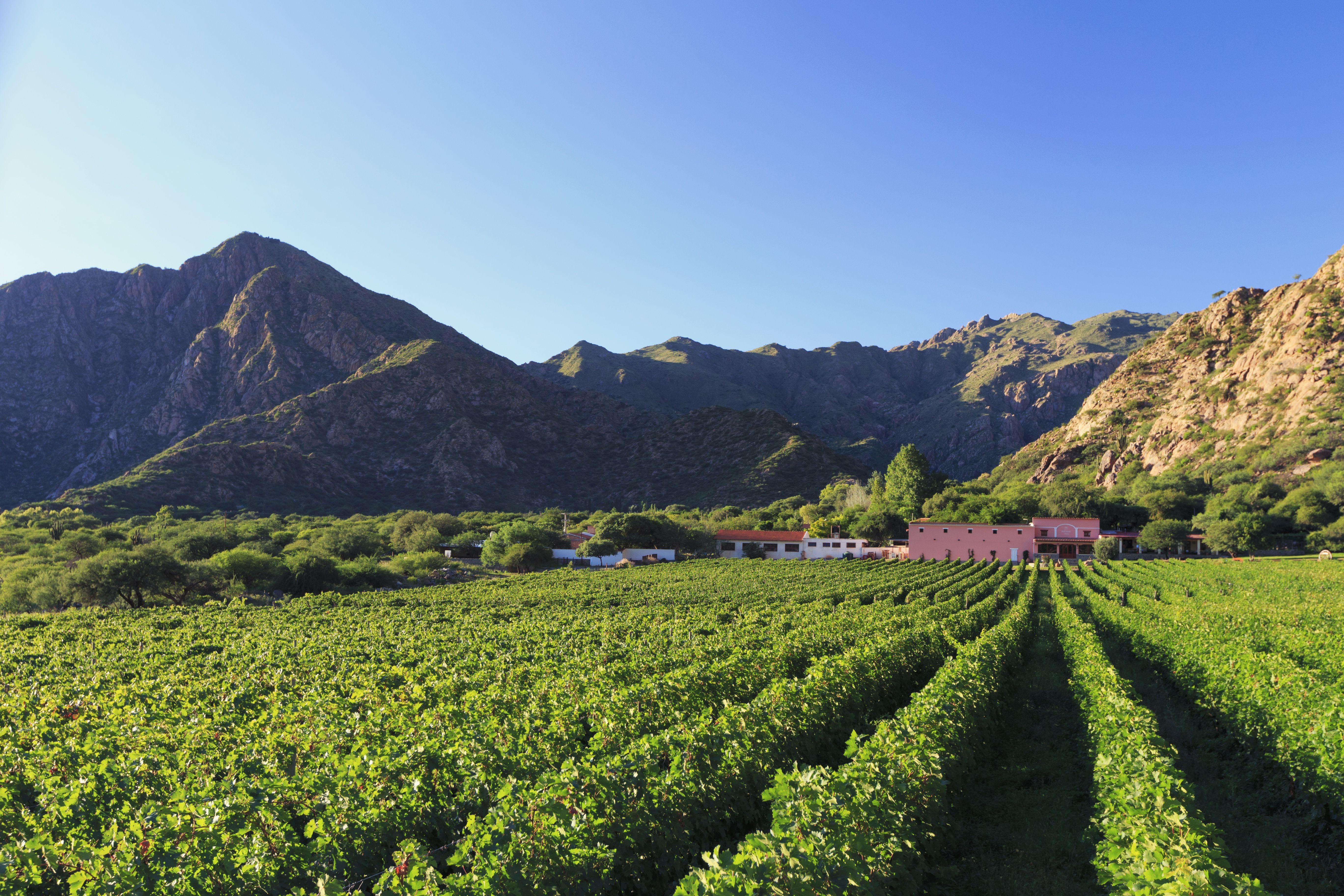 Bodegas de uva Argentina, Salta, Torrontes