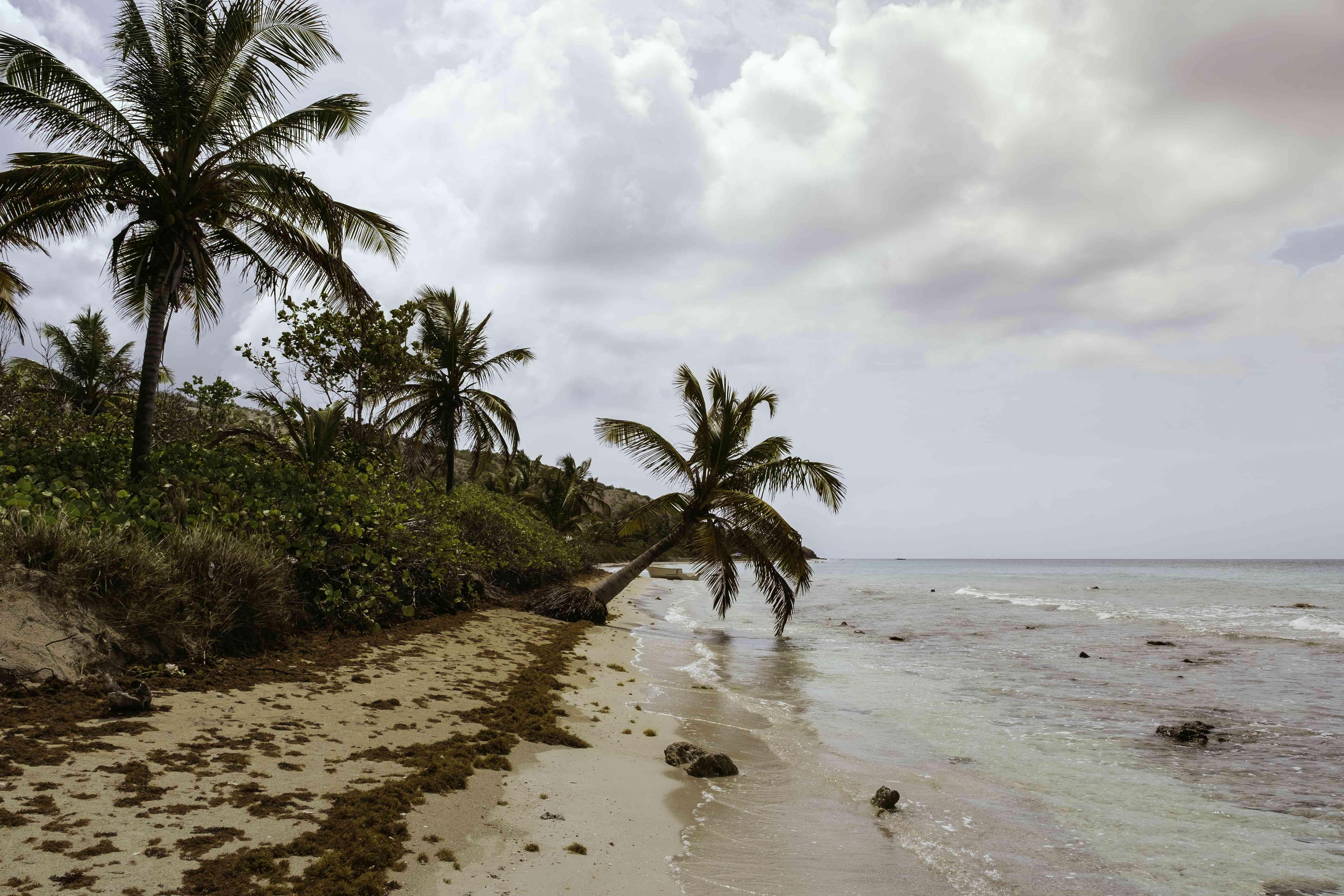 Palm trees along Zoni Beach