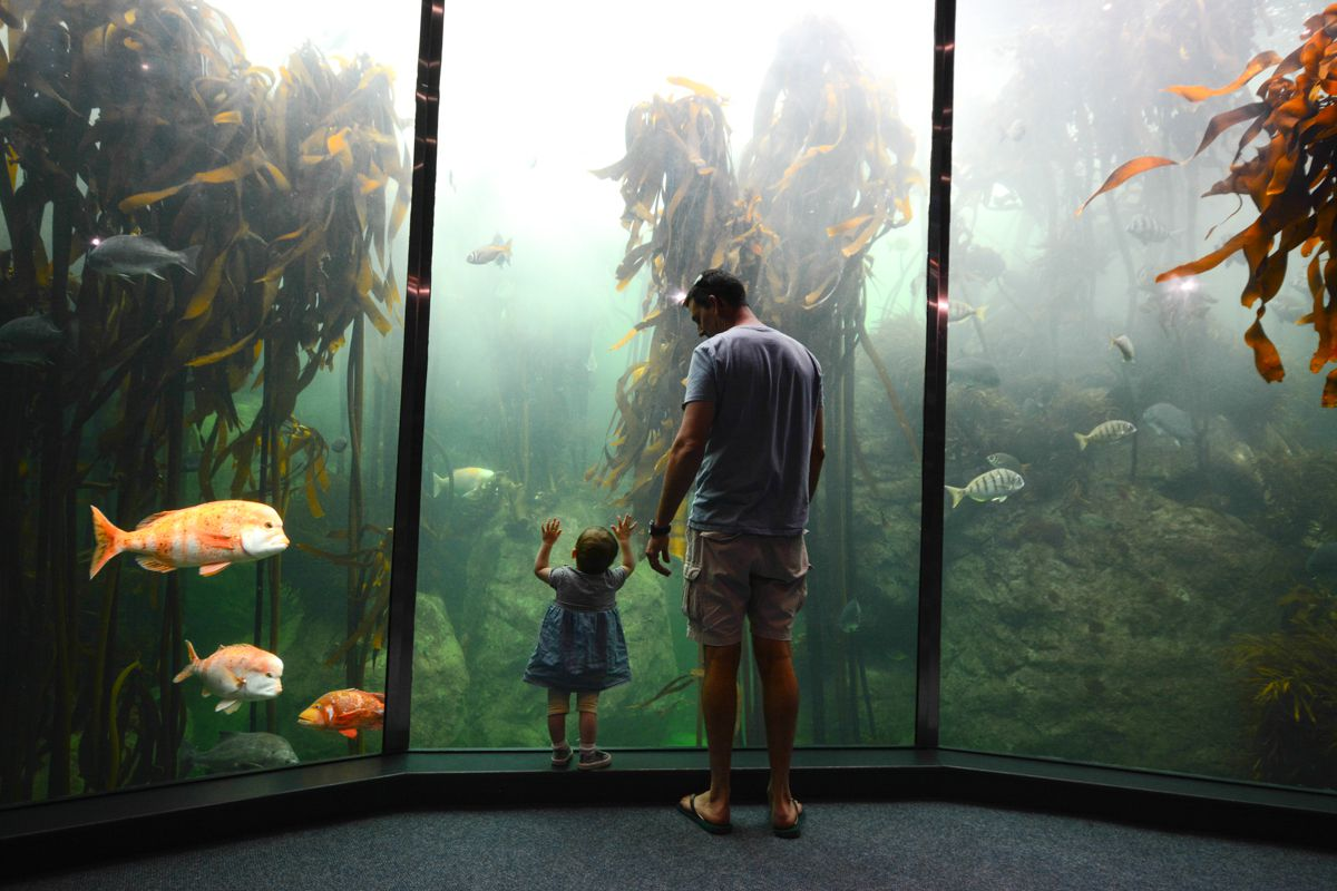 Father and daughter look into the tank at Cape Town aquarium
