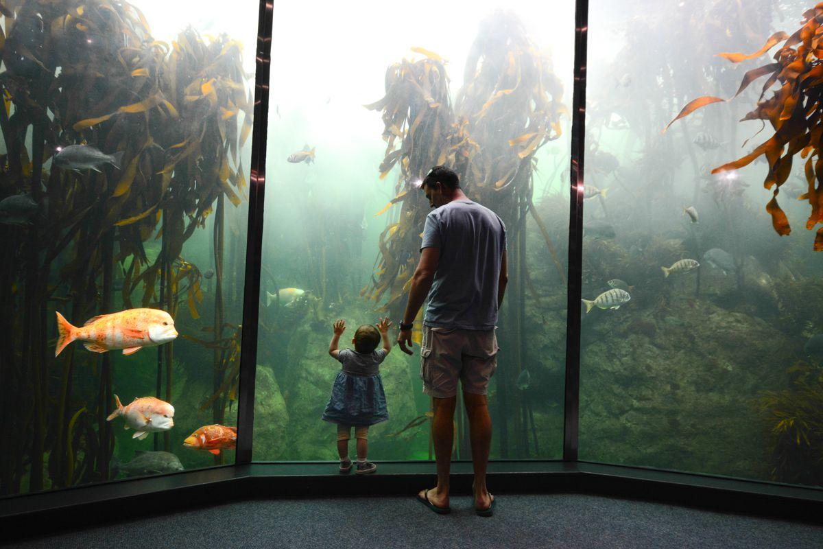 Padre e hija miran dentro del tanque del acuario de Ciudad del Cabo