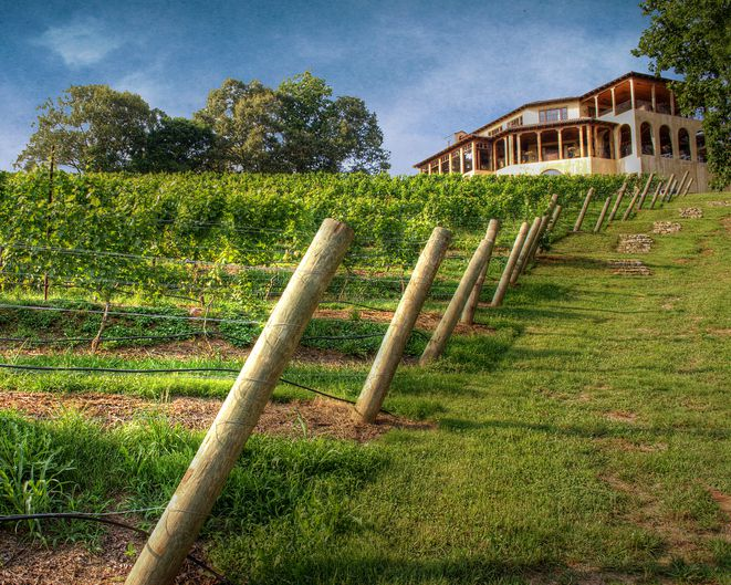 rows of grapevines on a hill with a large house in the background