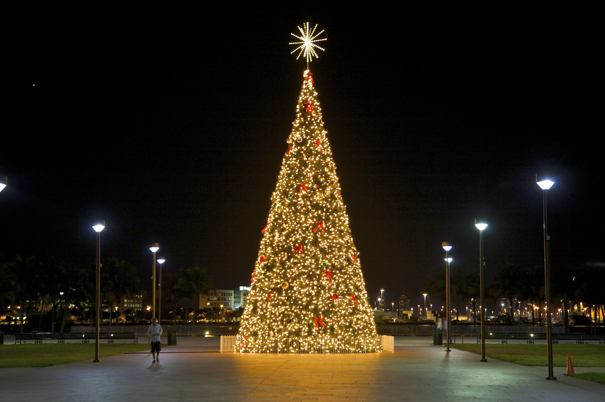 Where to Buy a Christmas Tree in Miami