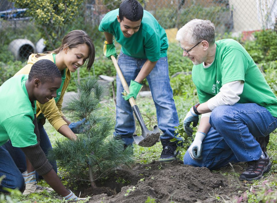 group of volunteers plant an evergreen tree in a park