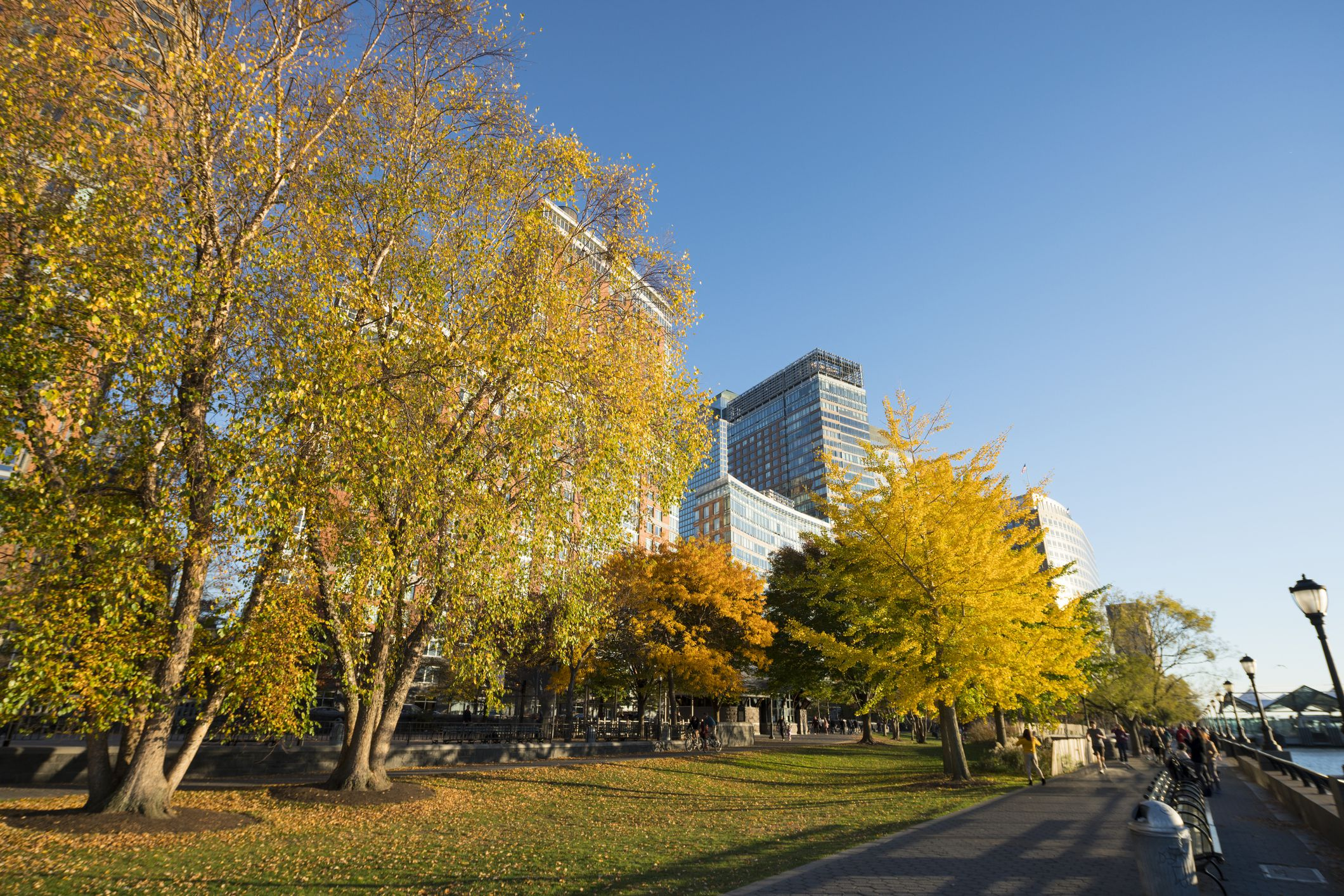 Autumnal trees in Lower Manhattan.