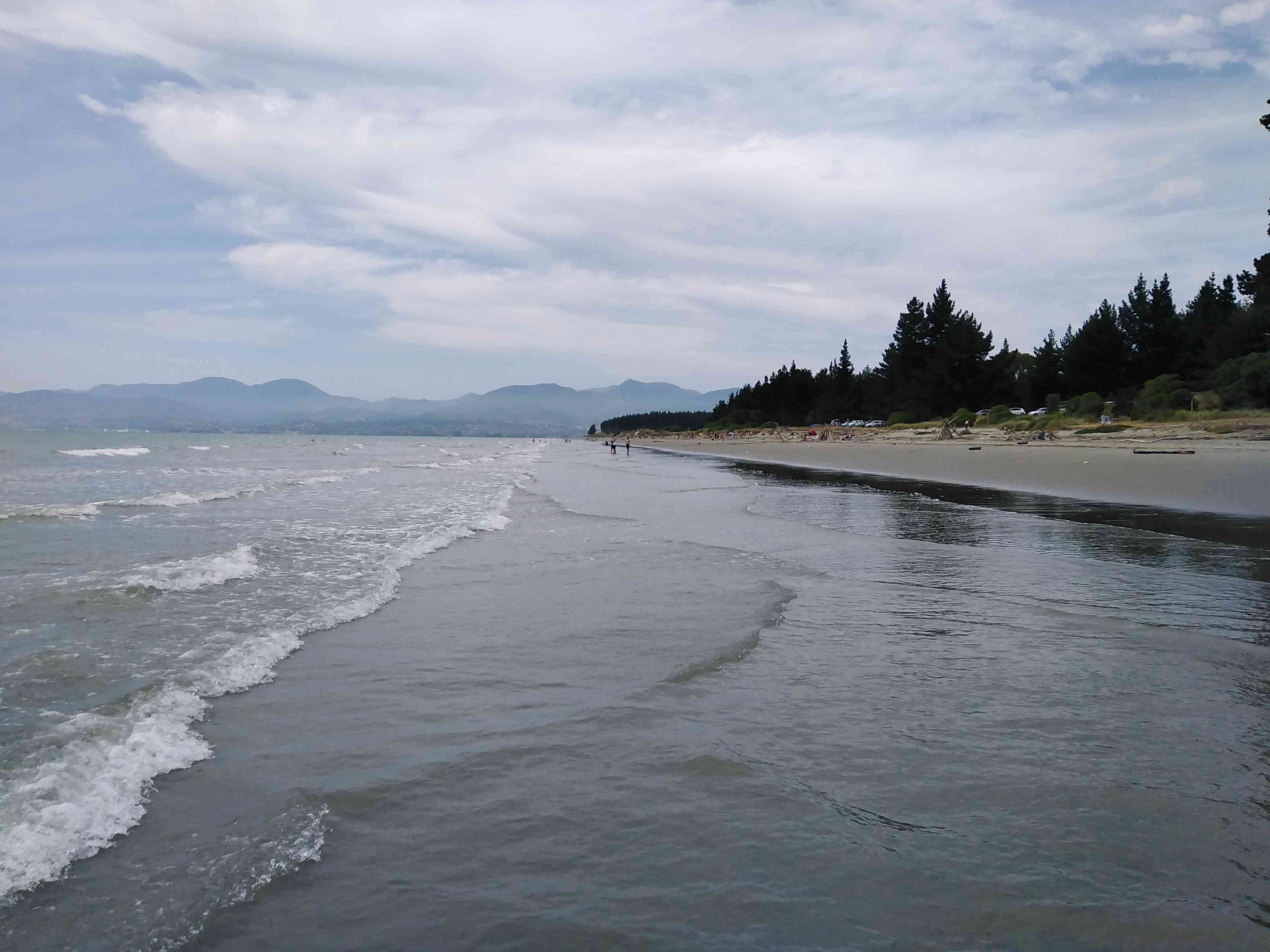 waves lapping at shore with pine trees