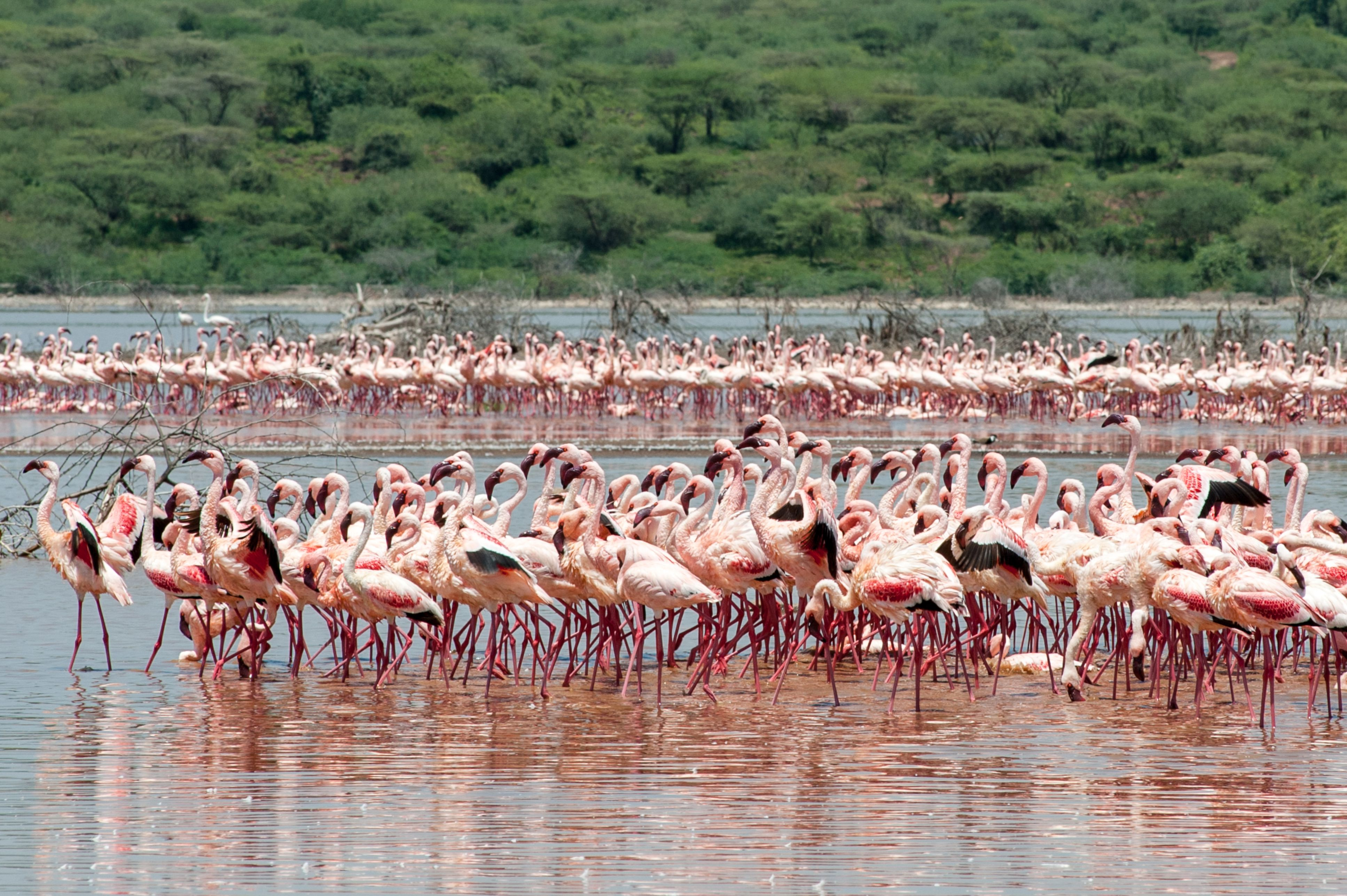 Less flamingoes