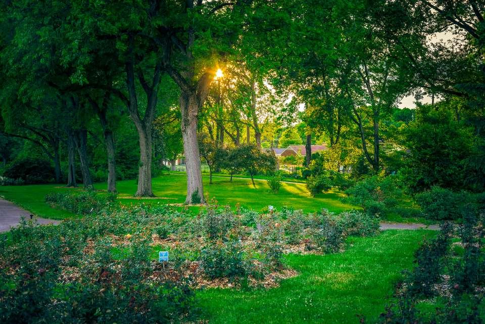 Columbus Park of Roses