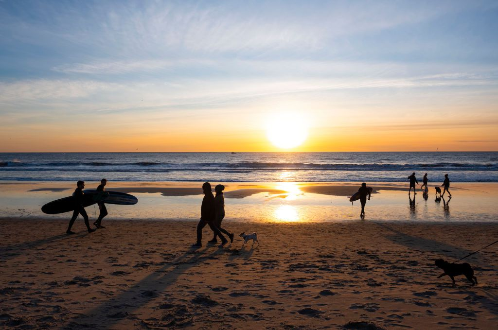 Surfers and dogs on the beach