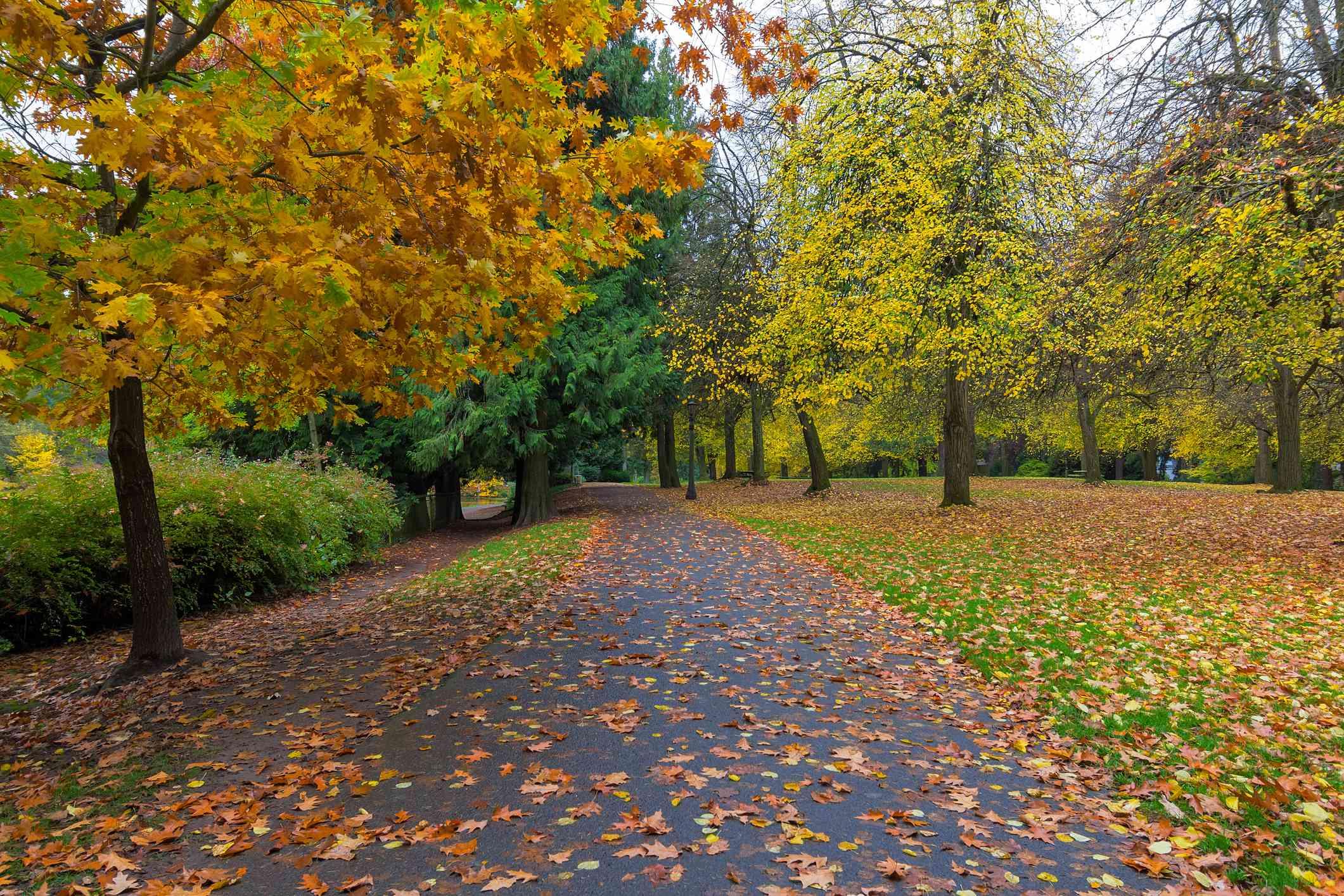 Fall foliage at Laurelhurst Park in city of Portland Oregon during Autumn season