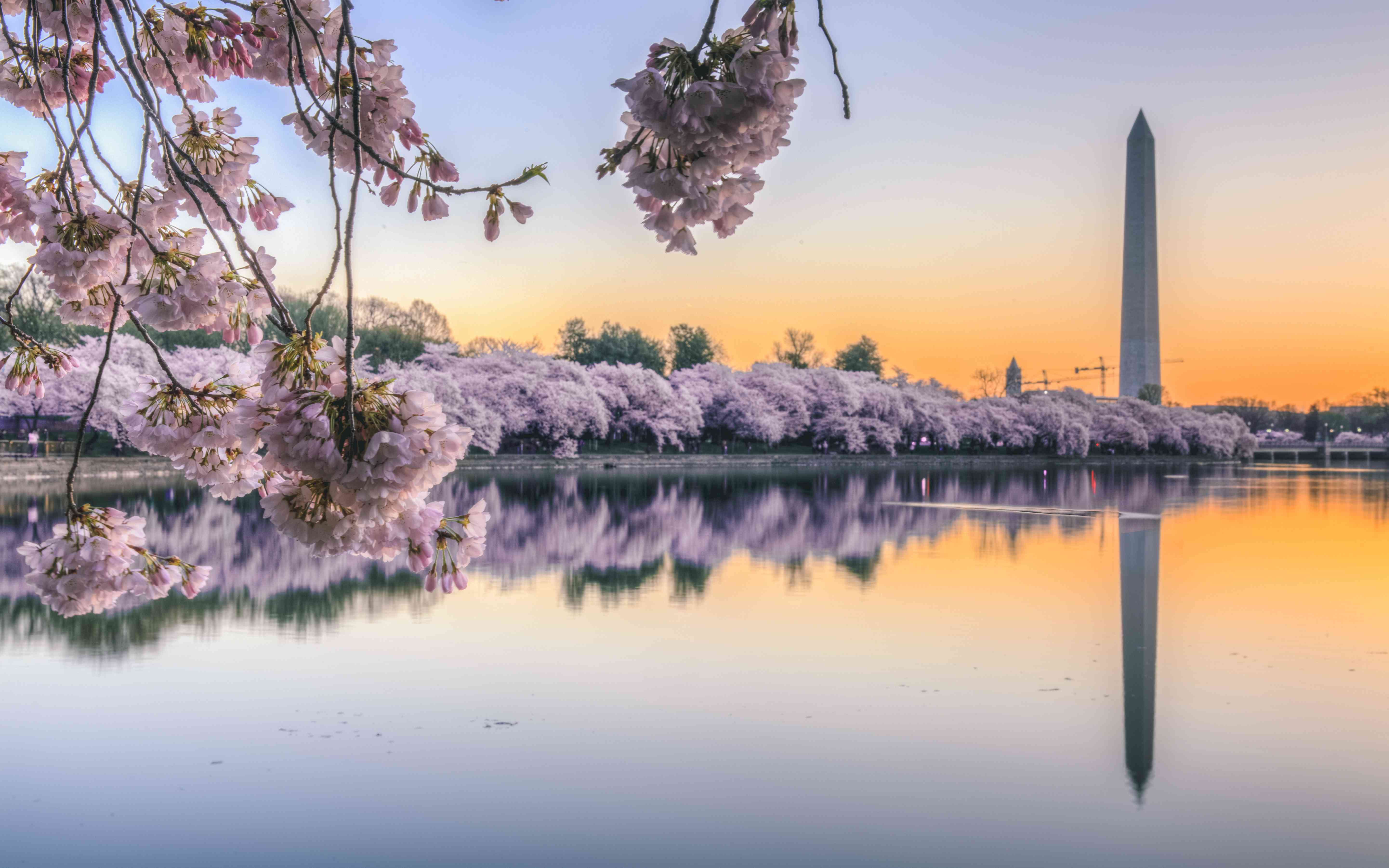 These Webcams Let You View Cherry Blossoms Around The World