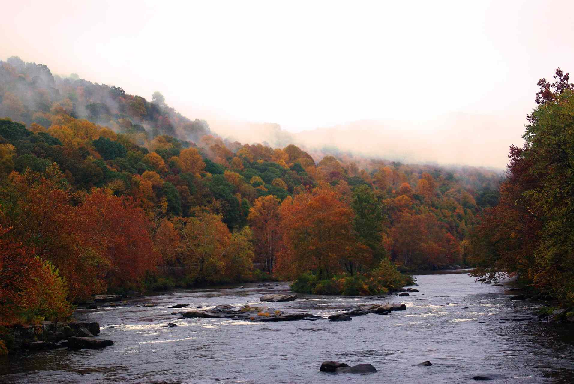 Ohiopyle State Park - view of the river and trees in fall colors.