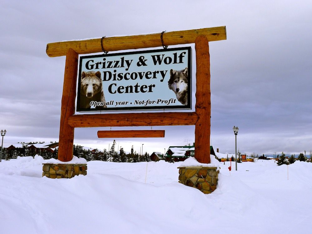 West Yellowstone Grizzly and Wolf Discovery Center