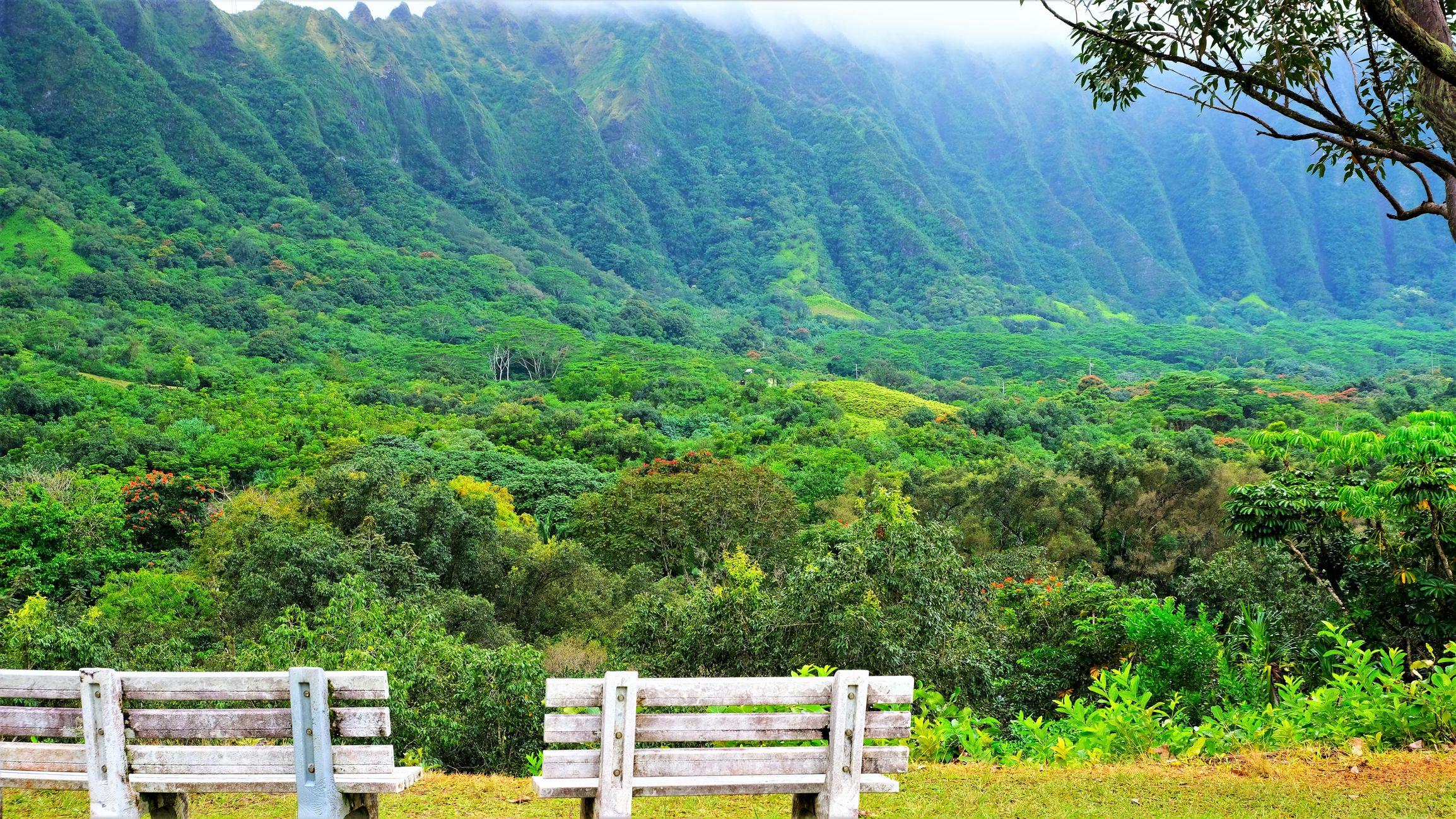 The 6 Best Botanical Gardens on Oahu