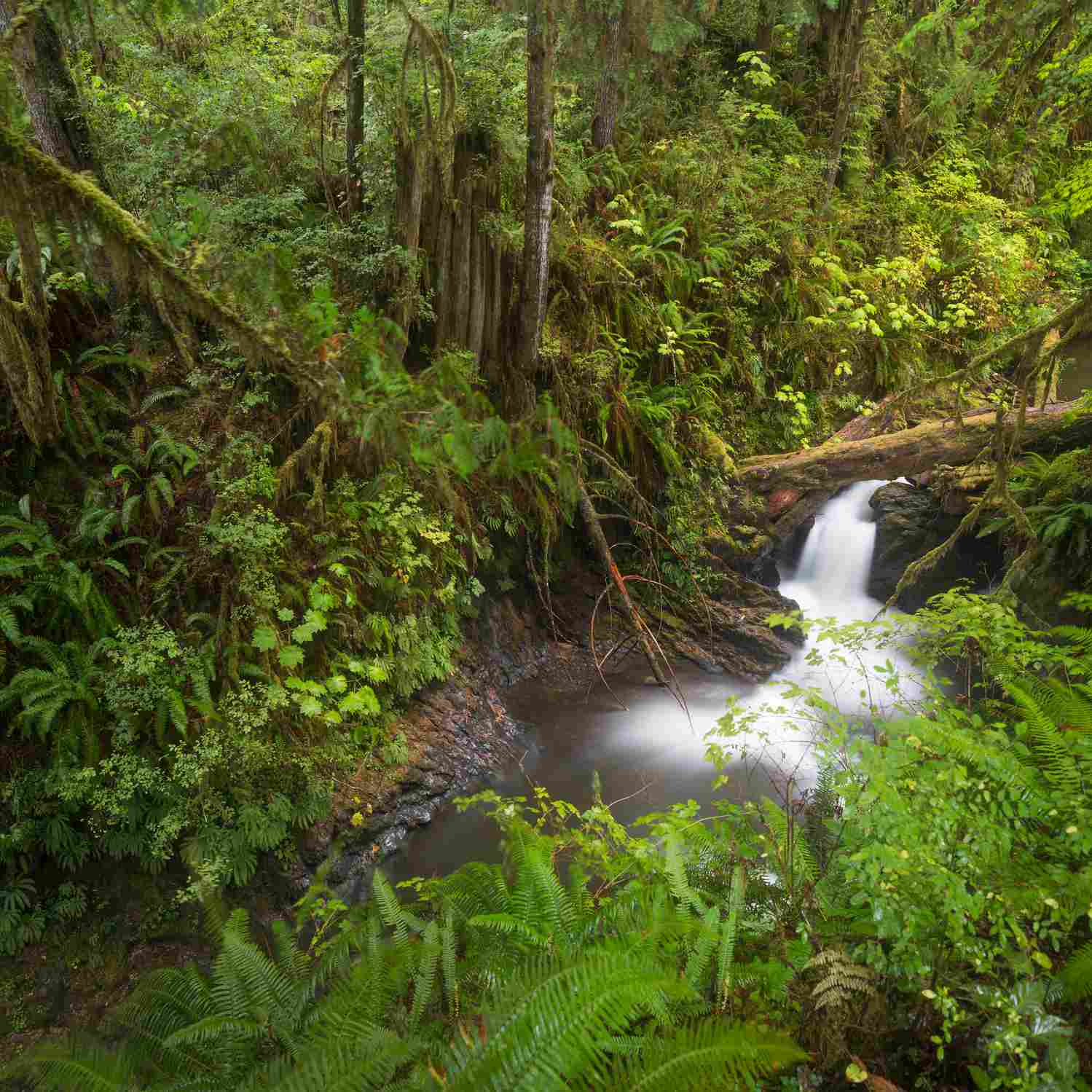 Willaby Creek Falls during rain, Quinault Rainforest