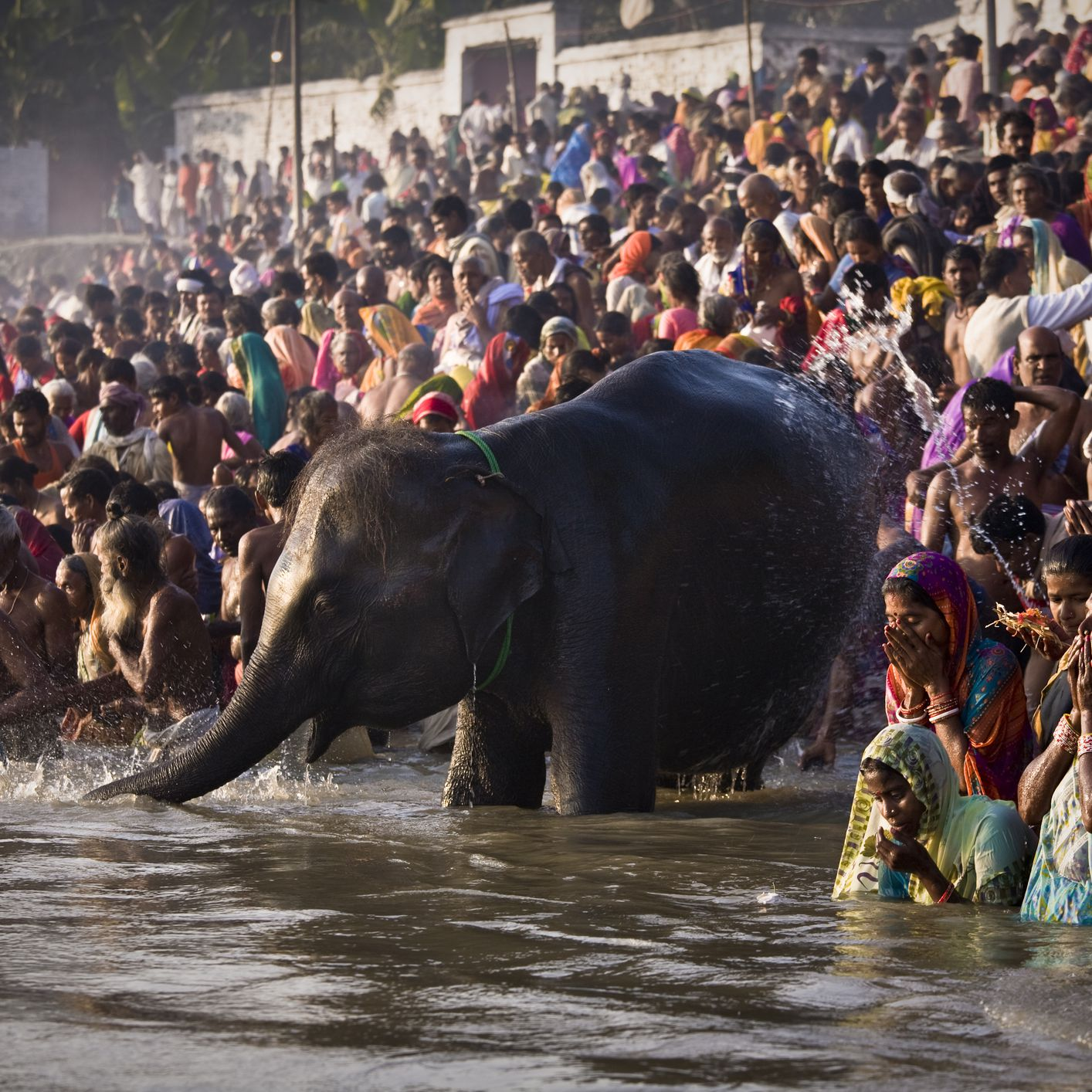 The Sonepur Far in Bihar and How to See It