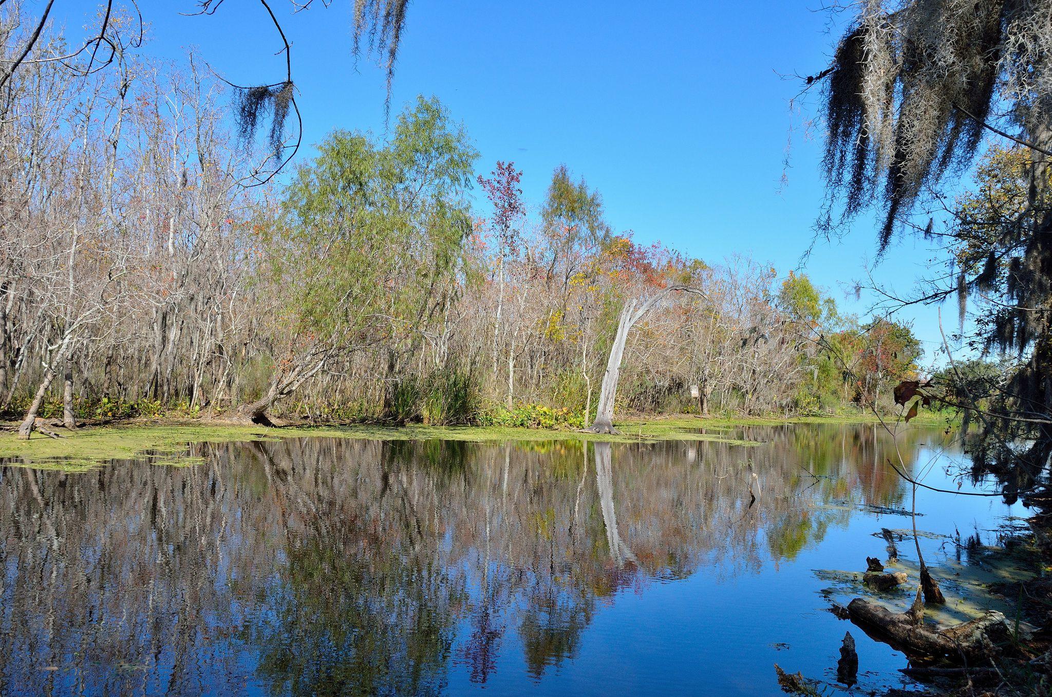 Se cree que más de 250 caimanes de más de seis pies viven en el Parque Estatal Brazos Bend