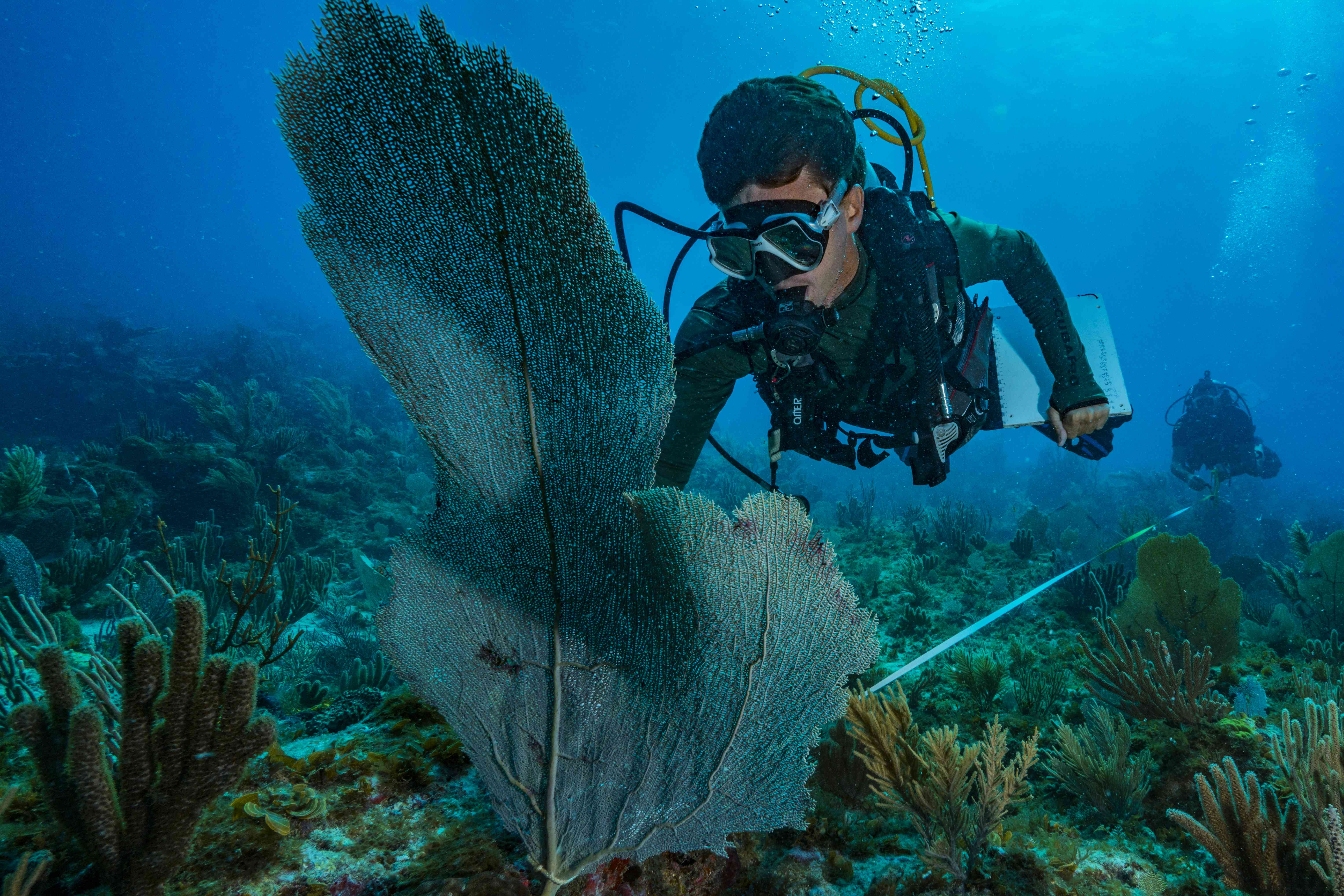 Diving on the coral reef of St. Martin