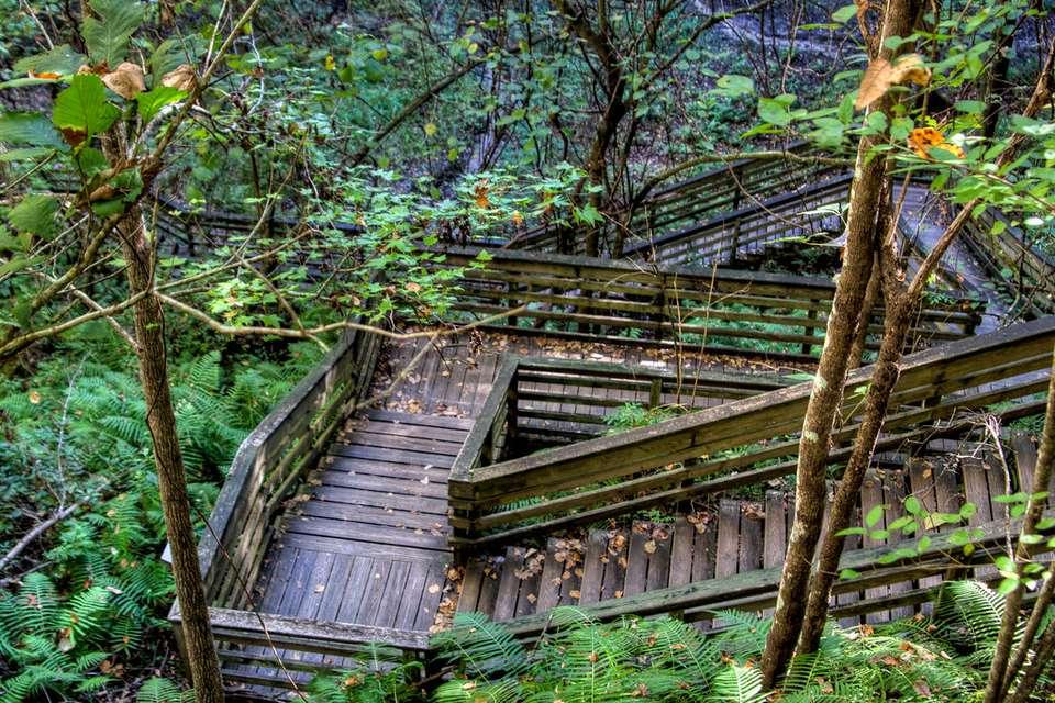 Wooden steps descending down the Devil's Millhopper