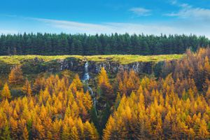 Forest and waterfall in Northern Ireland